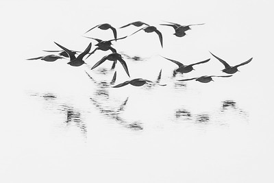Fly Away-IMG_1258
