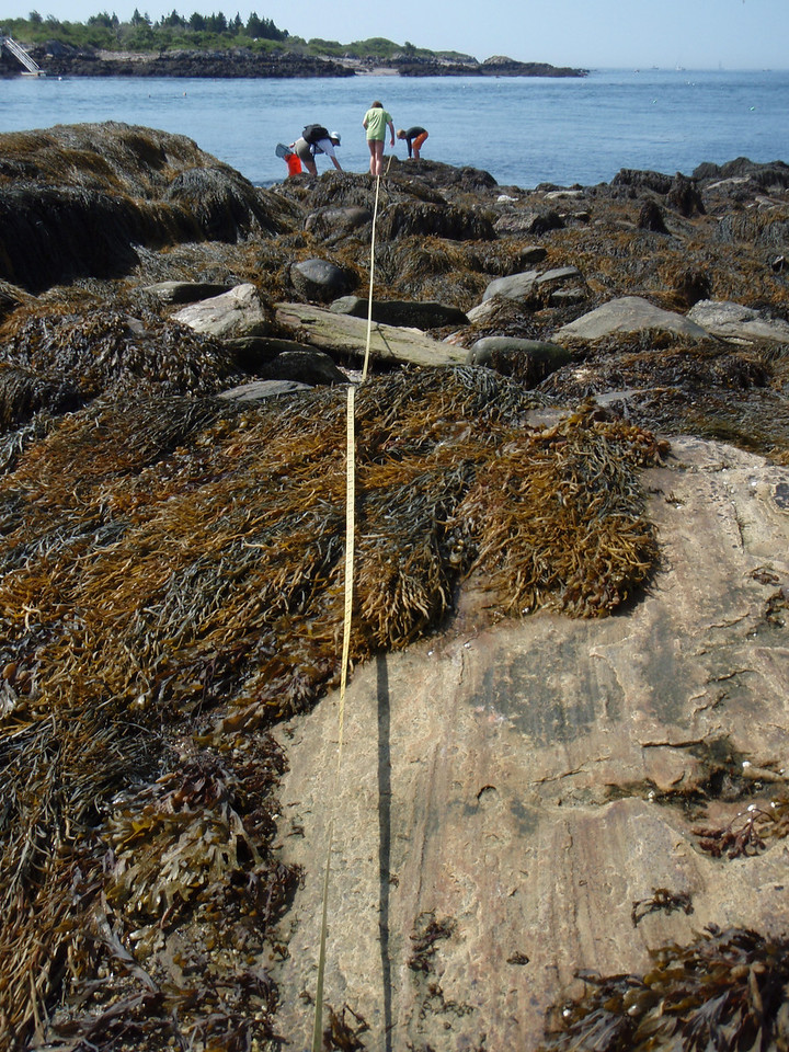 Good Sampling transect - taken from the 0 m mark.