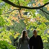 engagement photo walking as the light pours through autumn leaves in the arboretum at wesonbirt