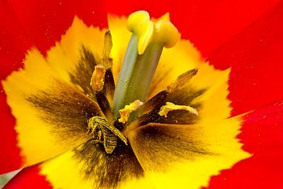 Death by Pollen