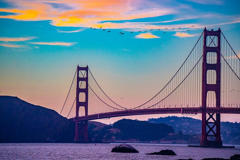 Pelicans over the Golden Gate