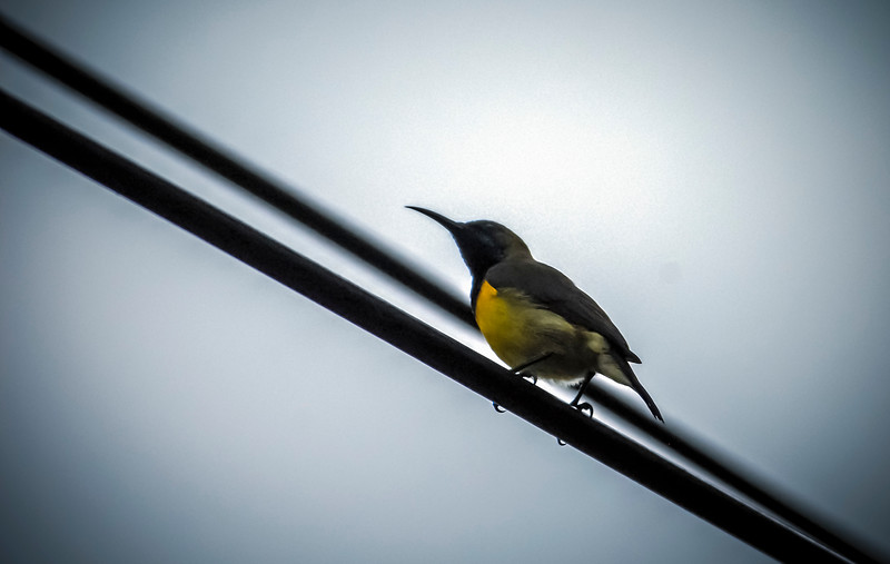 Proverbial Bird on a Wire