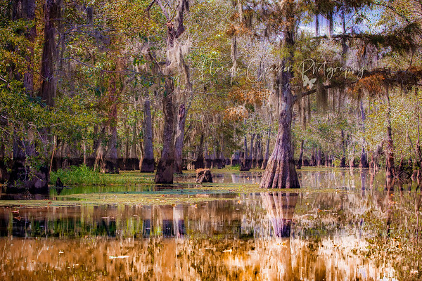 Backwater in Gum Bayou
