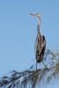 A heron (?) poses on Captiva Beach