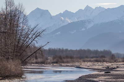 "ALASKA EAGLES 8995  ""Sunny Afternoon in the Valley of the Eagles""  Chilkat River - Haines, AK"
