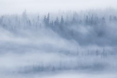 "ALASKA 0378  ""Dense Fog in the Chilkat River Valley""  Haines, AK"