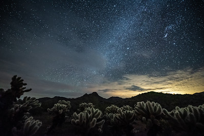 """Cholla, Mountains and the Milky Way"""