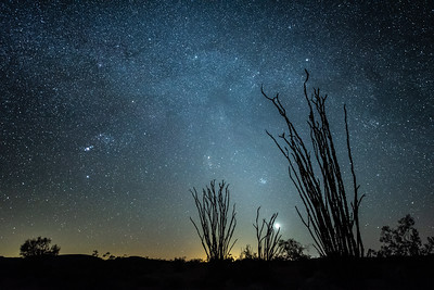 """Ocotillo and the Milky Way"""
