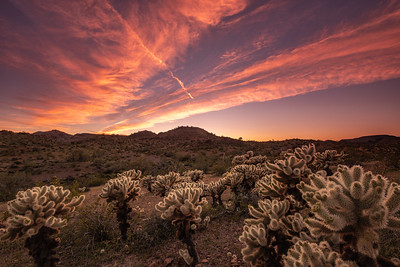 """Cholla Sunset in Kofa"""