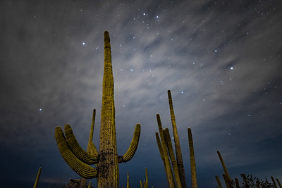 """Saguaro Nights"""