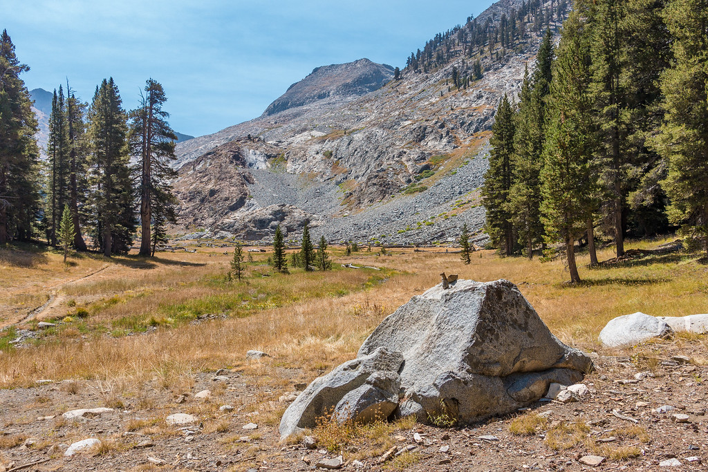 """CALIFORNIA 02880<br /> <br /> """"The Guardian of White Chief Canyon""""<br /> <br /> Sequoia National Park"""