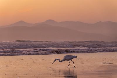 """""""Morro Bay Egret"""""""