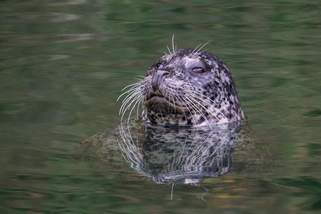 """CALIFORNIA 05765<br /> <br /> """"Friendly Seal""""<br /> <br /> Noyo Harbor"""
