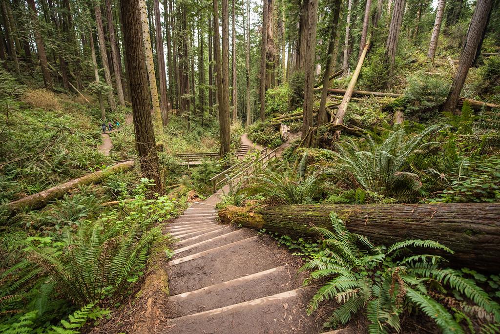 CALIFORNIA 2651<br /> <br /> Arcata Community Forest
