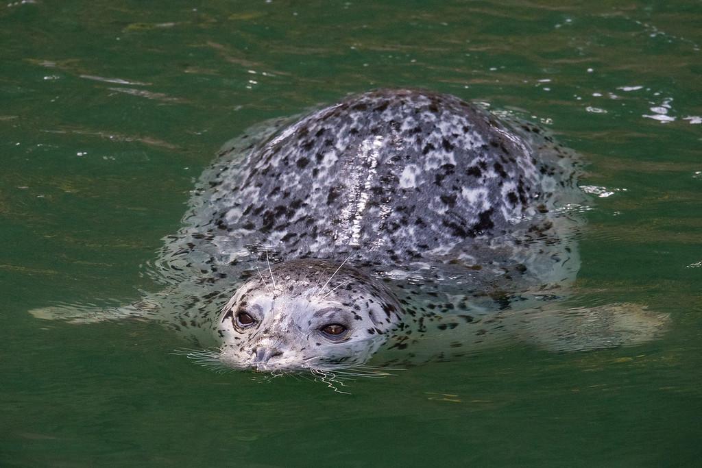 """CALIFORNIA 05798<br /> <br /> """"Friendly Seal""""<br /> <br /> Noyo Harbor"""