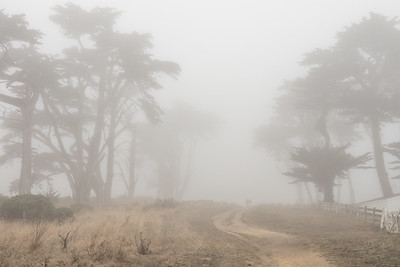 "CALIFORNIA 05360  ""A walk through the Cypress in the fog""  Point Reyes National Seashore"