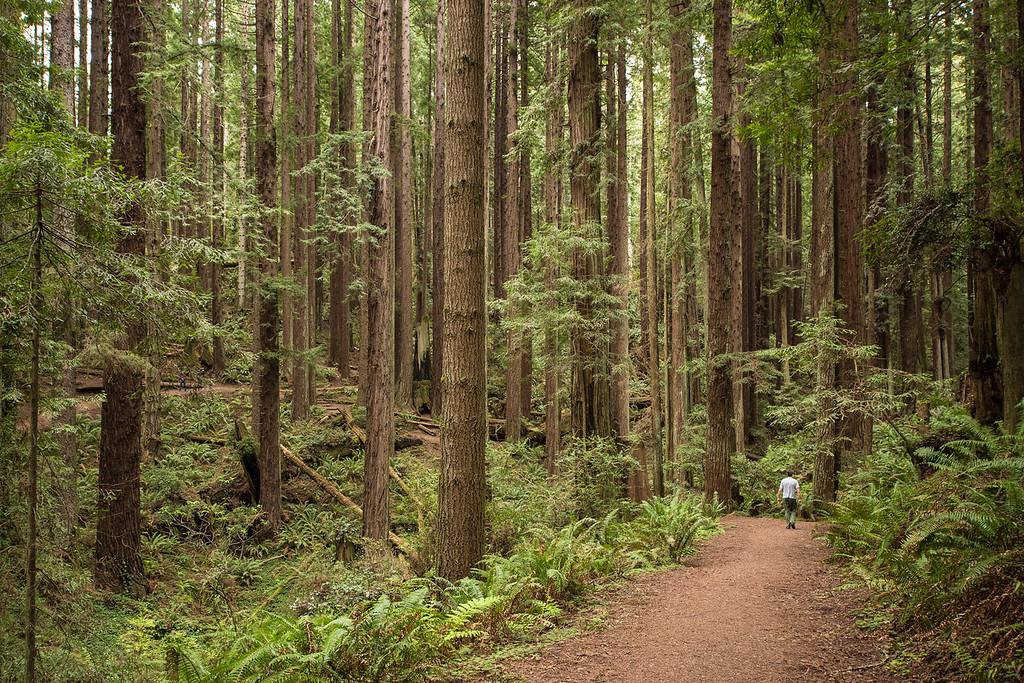 CALIFORNIA 2644<br /> <br /> Arcata Community Forest