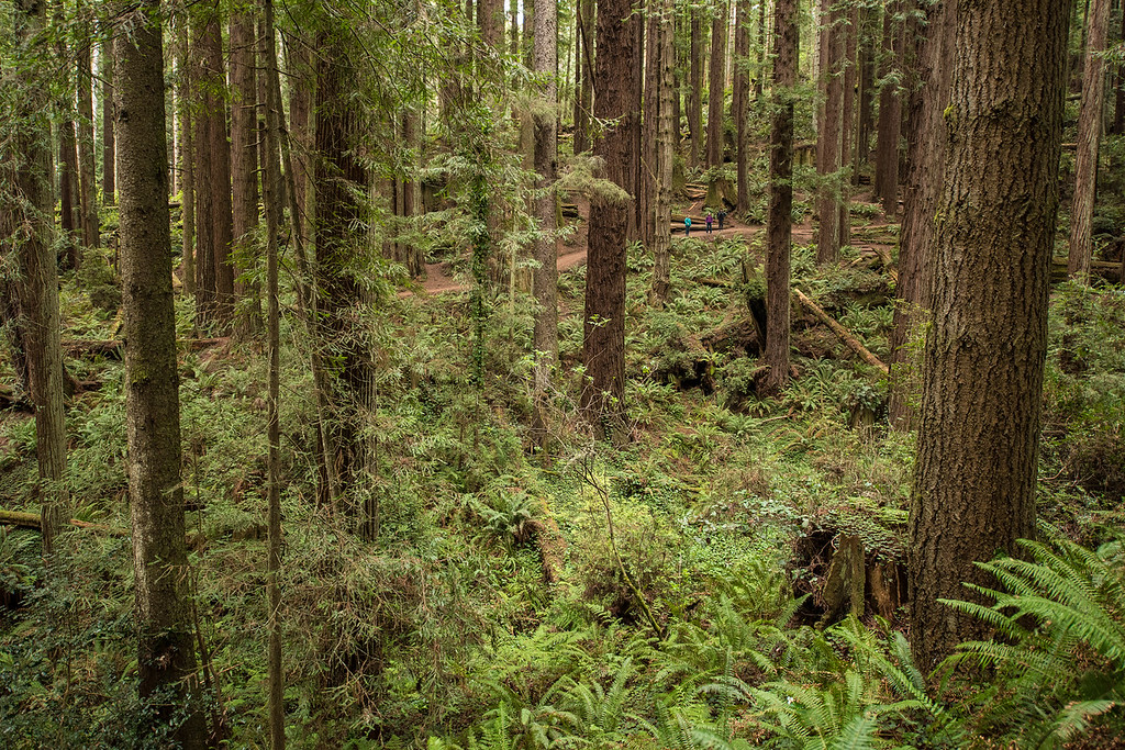 CALIFORNIA 2645<br /> <br /> Arcata Community Forest