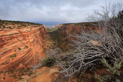 "COLORADO 7792  ""Red Canyon""  Colorado National Monument"