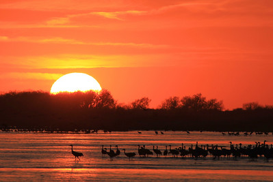 "NEBRASKA 6033  ""Sandhill Crane Sunset over the Platte River"""