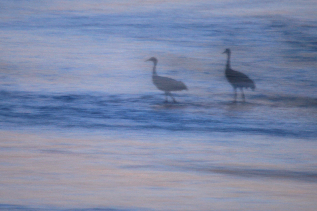 "NEBRASKA 6331  ""Sandhill Silhouettes""  A slow shutter speed combined with a panning motion of the camera provides for a dream-like image of this pair of Sandhill Cranes on the Platte River."