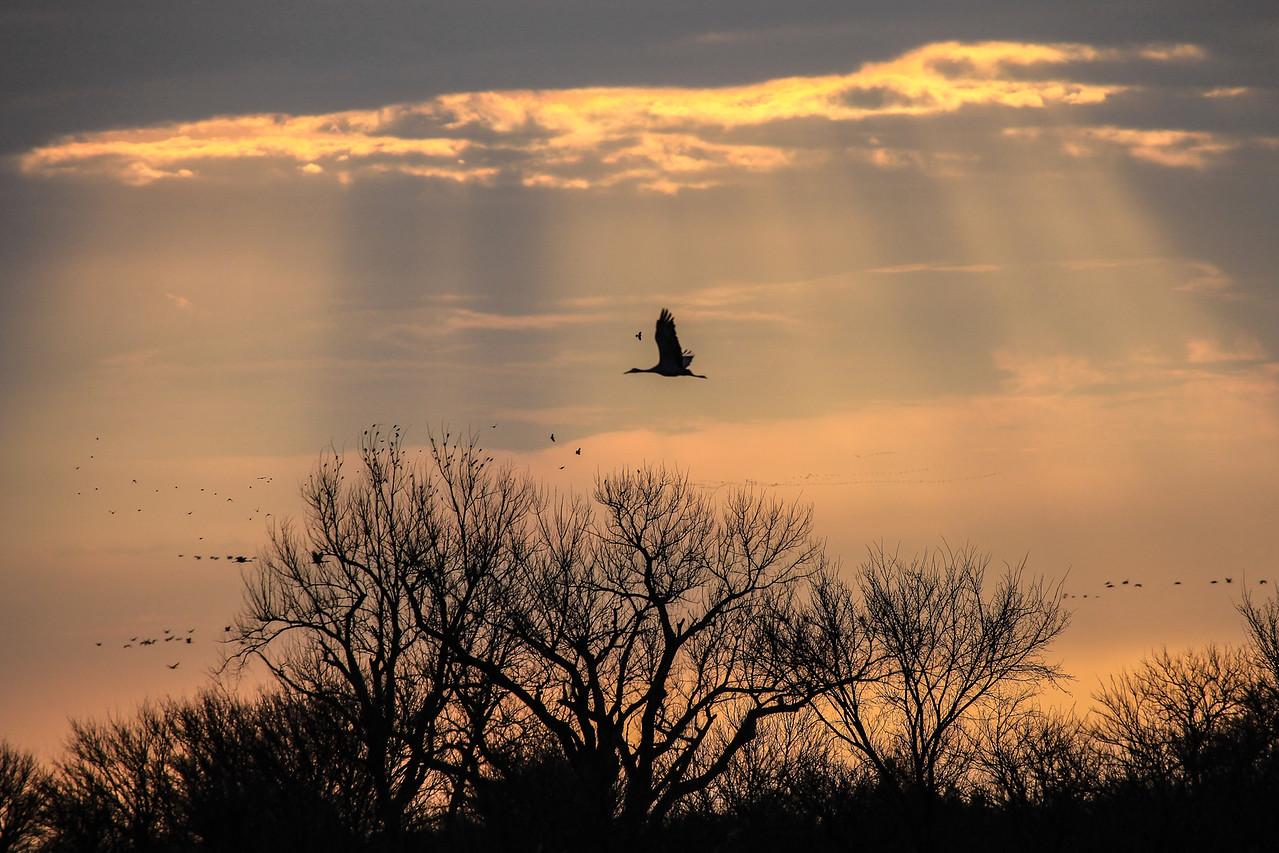 """NEBRASKA 6506<br /> <br /> """"Morning Flight through Rays of Light"""""""