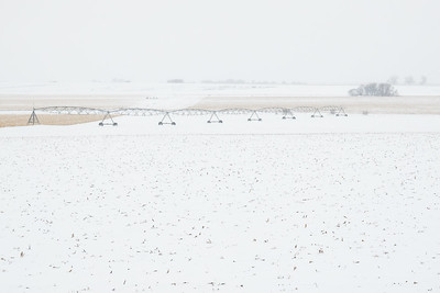 """Spring Snow Storm"""