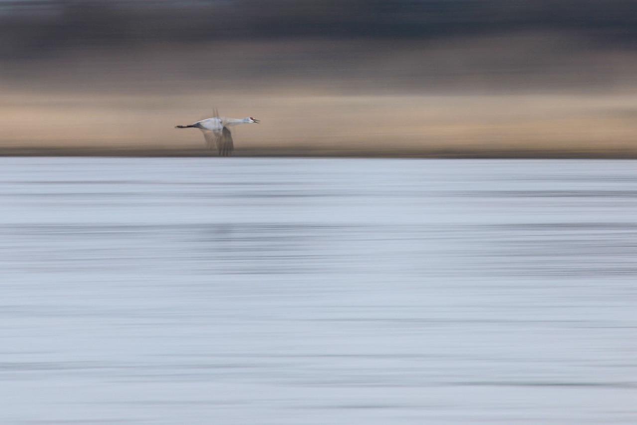 """NEBRASKA 7420<br /> <br /> """"Cruising the Platte River""""<br /> <br /> A slow shutter speed makes for an abstract image of a solitary Sandhill Crane as it flies downstream along the river."""