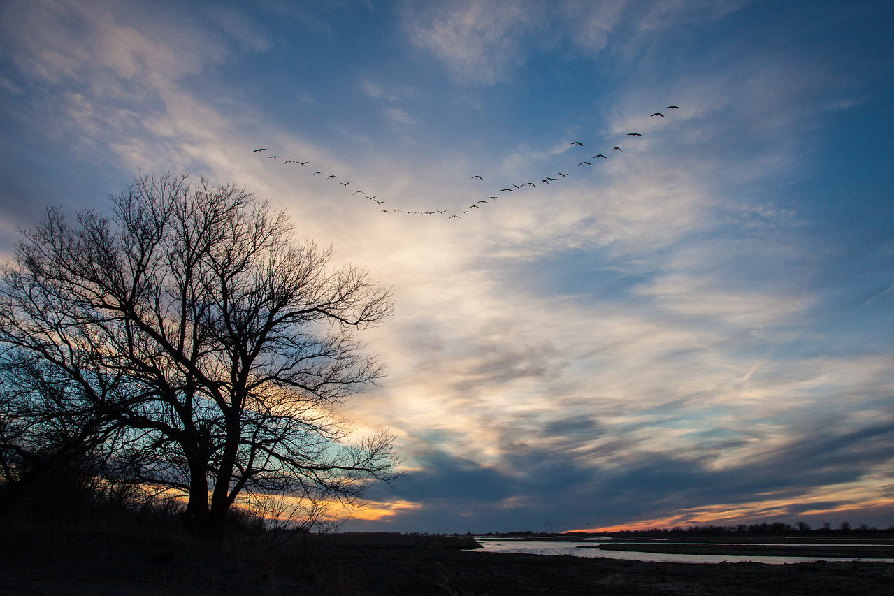 "NEBRASKA 2162<br /> <br /> ""Rowe Sanctuary Sunset over the Platte River""<br /> <br /> Sandhill Cranes fly towards the sun as they prepare to land on the river to roost for the night."