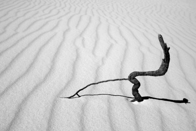 "NEW MEXICO 7700  ""Life is a struggle""  White Sands National Monument"