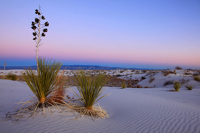 "NEW MEXICO 4839  ""Evening Yucca""  White Sands National Monument"