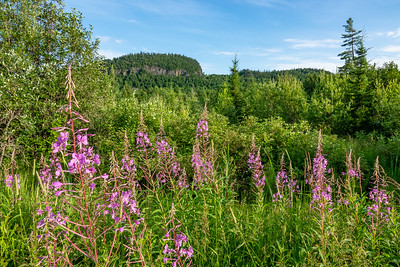 """Fireweed Valley"""
