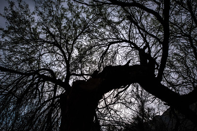 """Moonlit Night in the Rio Grande Riparian Zone"""