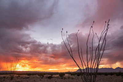 """Clearing Storm, Ocotillo and Chisos Mountains"""