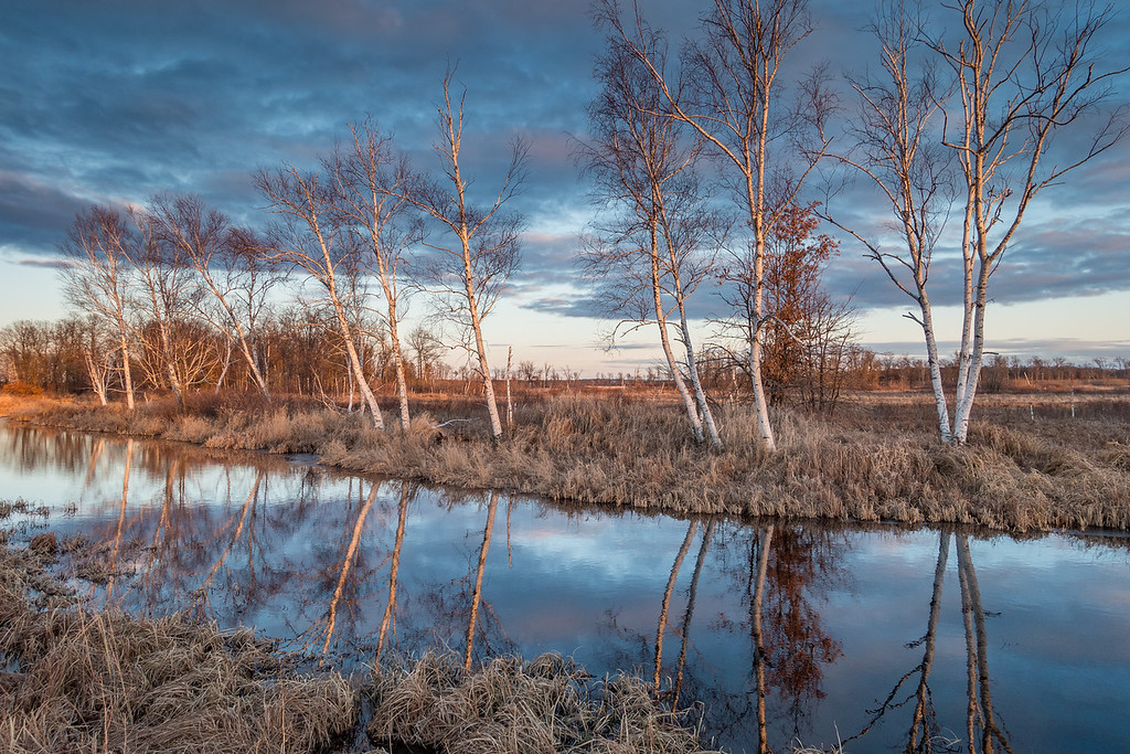"""WISCONSIN 09109<br /> <br /> """"Sunset on the Birch Meadow""""<br /> <br /> Crex Meadows Wildlife Area - Grantsburg, WI"""