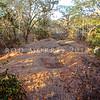 21003-50117  Komodo dragon (Varanus komodoensis) gravid female guarding and excavating her nest chamber in an extensive megapode nest mound. Loho Liang, Komodo Island *