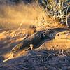 21003-50116  Komodo dragon (Varanus komodoensis) gravid female excavating her nest chamber in a megapode mound. Loho Liang, Komodo Island *