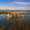 21003-50402  Komodo dragon (Varanus komodoensis) feeding on a dead sea turtle washed ashore. Loho Liang, Komodo Island *