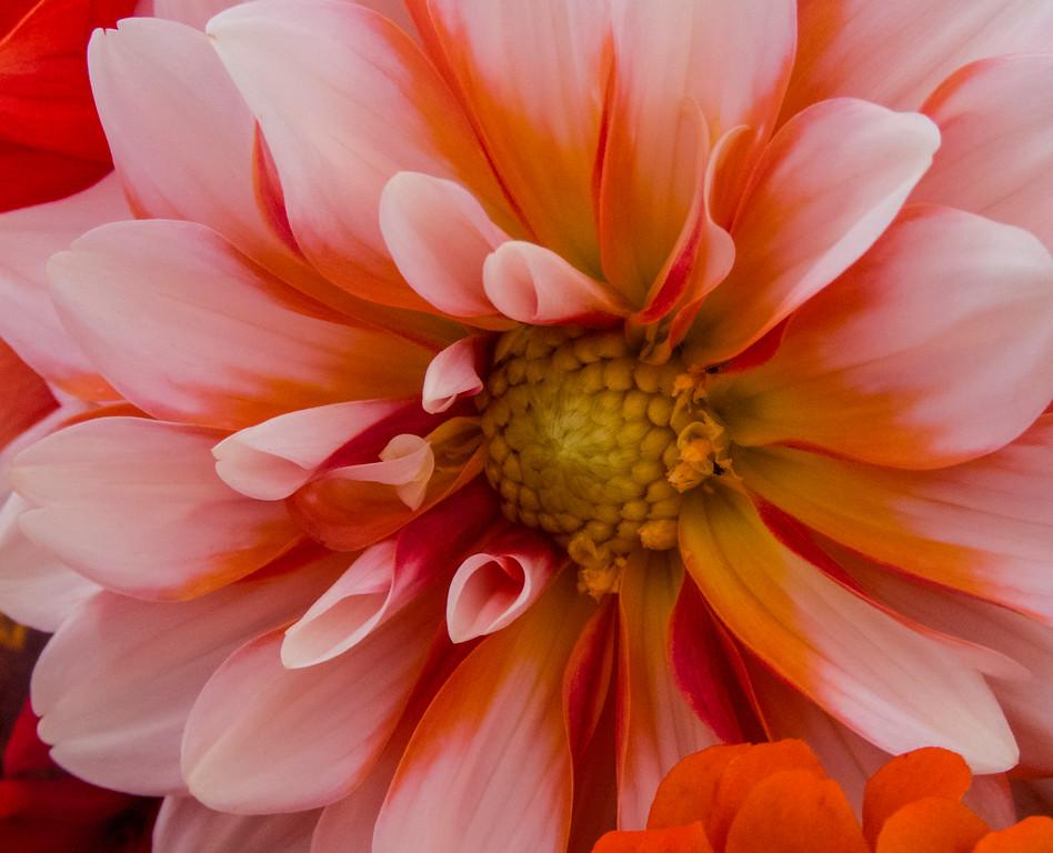 Dahlia?? Flower
