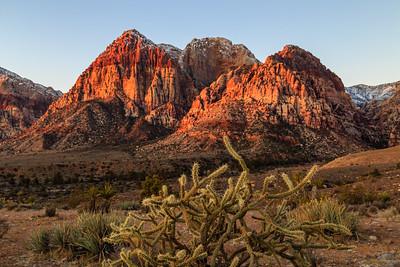 Red Rock Cactus
