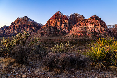 Red Rock Cactus and Palms
