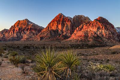 Red Rock Canyon Palms