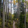 White Aspens Framing the Trail