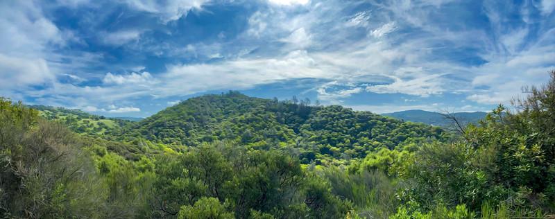 Calfornia Jungle