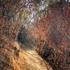 Buckeye Forest