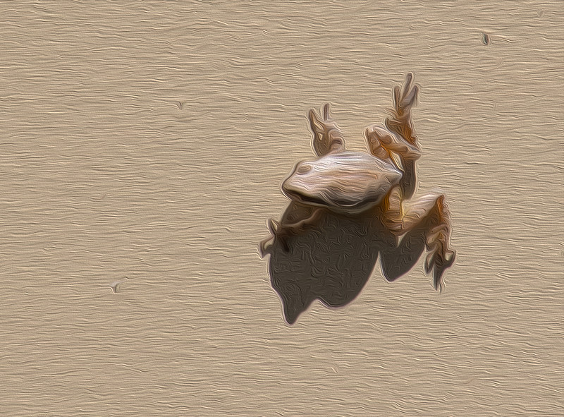 Frog on the House