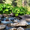 McCloud River Habitat