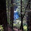 Middle McCloud River Falls through the Trees