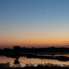 Flight at Sunset at the Cosumnes River Wildlife Refuge