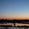 Sunset at the Cosumnes River Wildlife Refuge